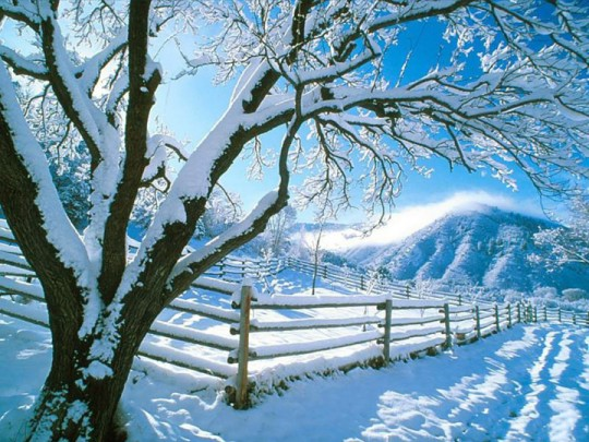 Snow Tree Fence