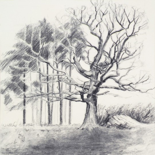 Under the Oak - charcoal drawing by artist Waitsel Smith