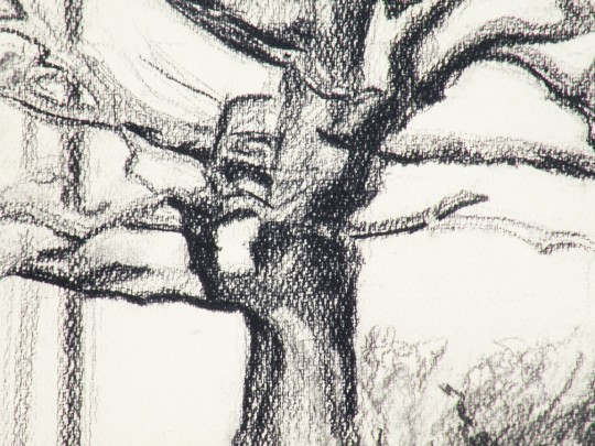 Under the Oak, Detail - charcoal drawing by artist Waitsel Smith