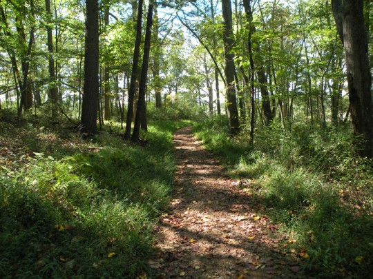 Path on Westover Trails, Biltmore