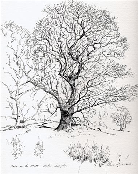 Architectural Trees Drawings Drawing of a Tree